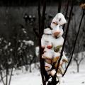 15入冬初雪之练拍