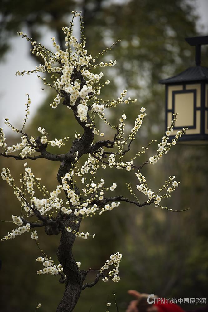 春DSC_0160---3.jpg