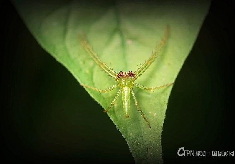 微距〈蜘蛛〉