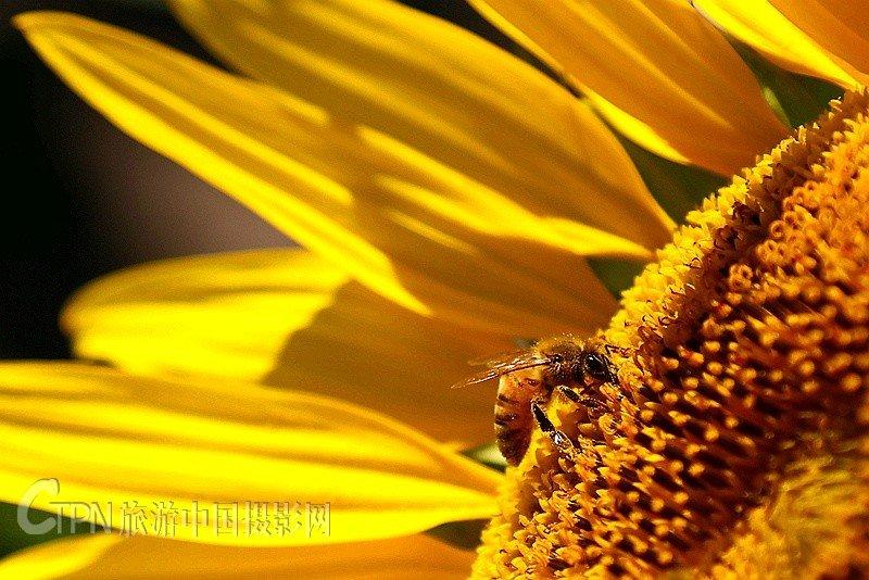 IMG_2862_8蜜蜂.jpg