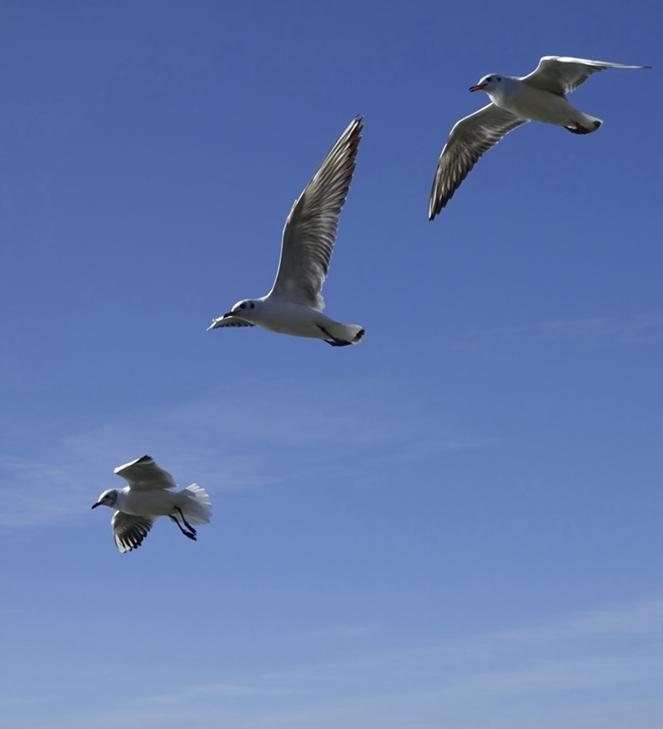 天高任鸟飞