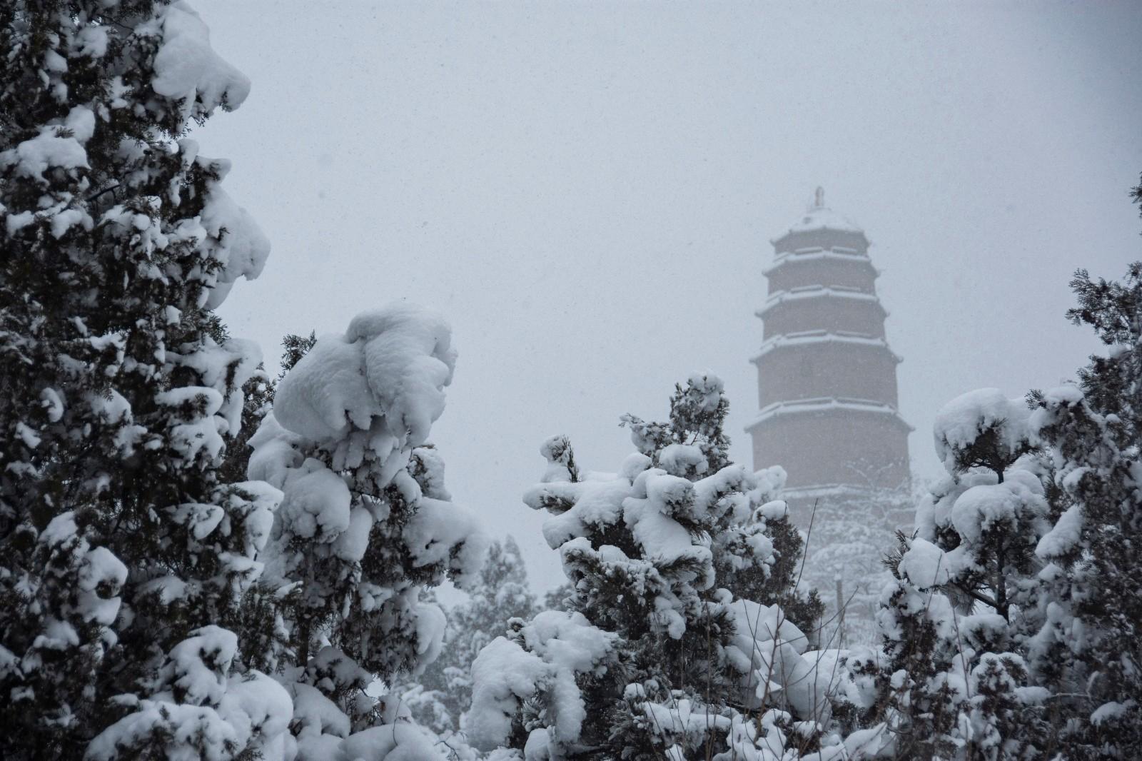 2019年白马公园的冬天