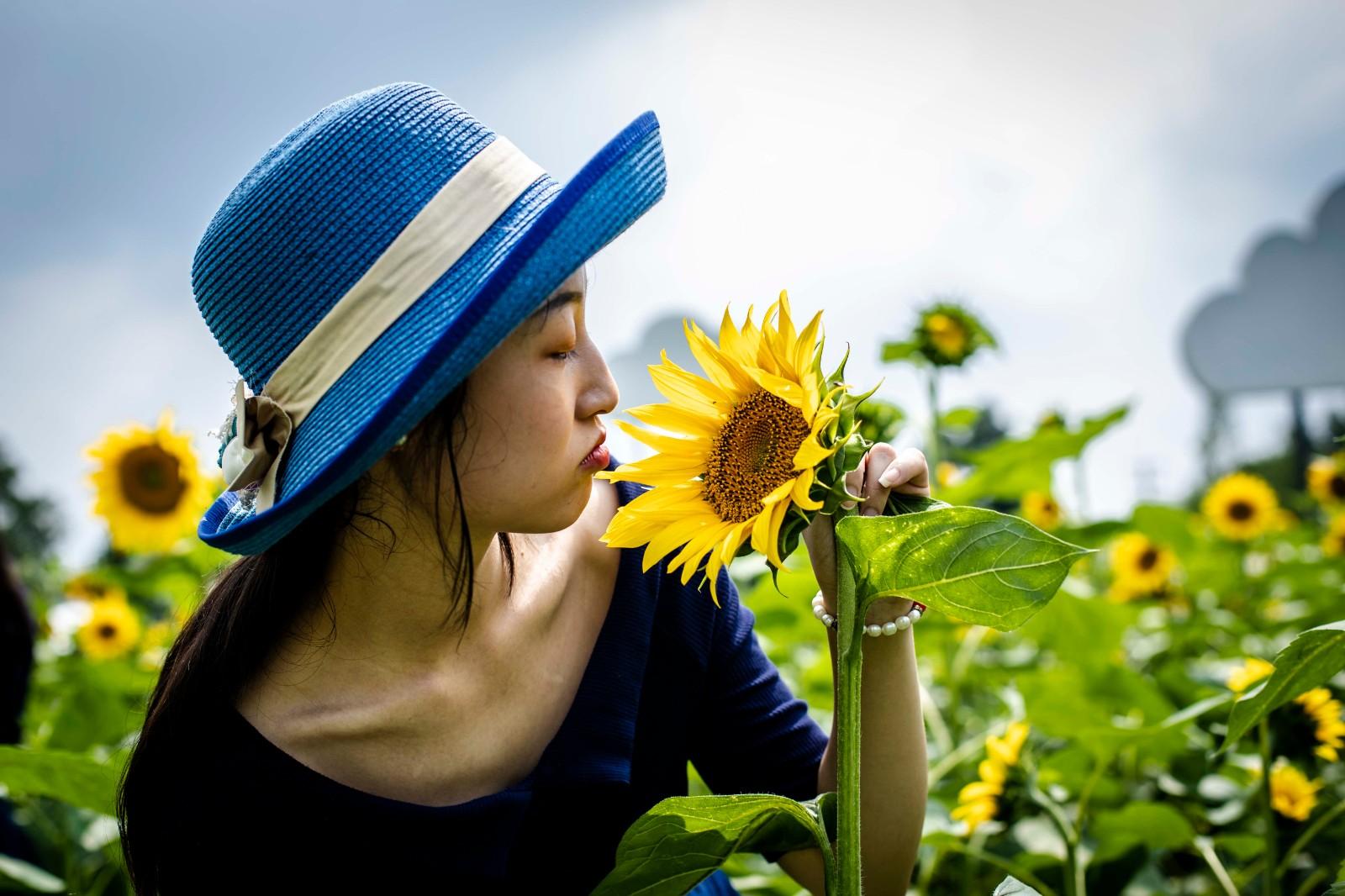 天府芙蓉园内的葵花与美女