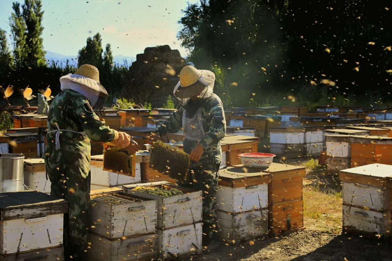 辛勤的养蜂人