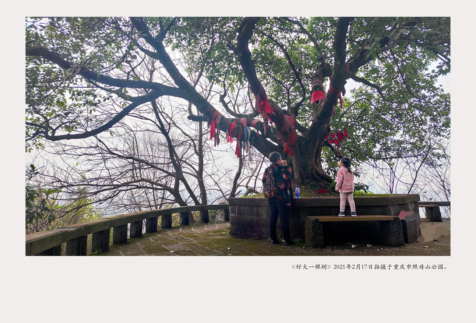 《好大一棵树》