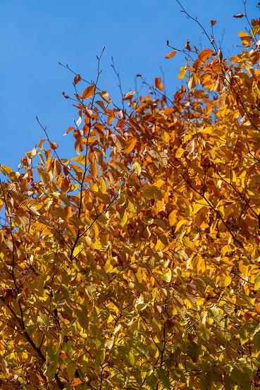 """""""我把这个秋天分享给你,希望带给你好心情"""""""
