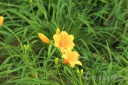 公园里的小花